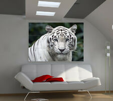 Tiger White large giant animals poster print photo mural wall art ia571
