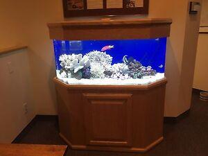 Image Is Loading 60 Gallon Acrylic Aquarium W Oak Furniture
