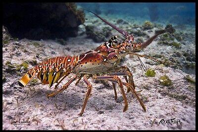 "Fish & Aquariums Original Realfish H20 Series Lobster ""bug"" Fish Mat Floor Mat Doormat 24x36 Refreshment"