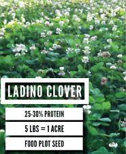 50 Lbs. Alyce Clover Seed Great Deer Food Plot