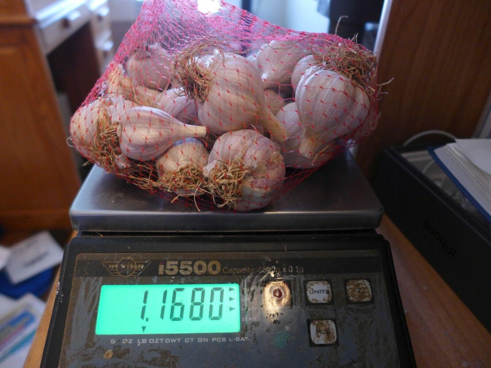1 lb Small Organic Russian Red Garlic Bulbs grown Organically 2021 in WV