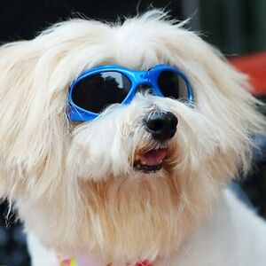 Doggles-Dog-Goggles-Sunglasses-UV-Eye-Protection-Eye-Wear-Size-Medium-Small