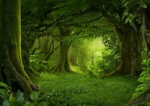 Beautiful-Magical-Green-Forest-Poster-Size-A4-A3-Nature-Poster-Gift-8294