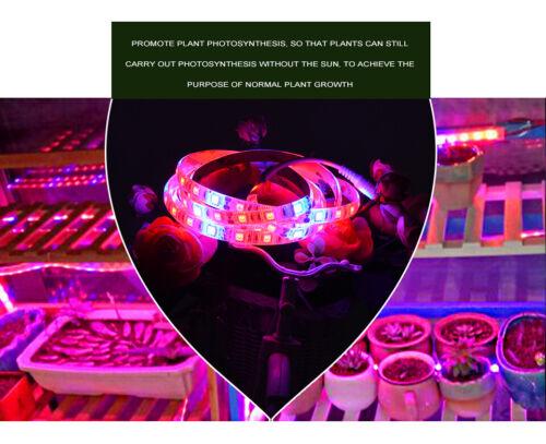 Hydroponic DC 12V 1M 2M 3M 5M 5050 Red Blue Plant Grow LED Light Strip Aquarium
