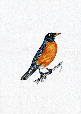 NEW PRINT! American Robin, Bird, Print of Original Watercolor Painting