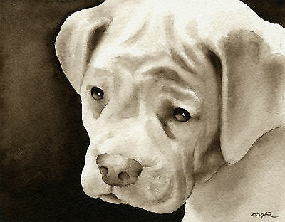 Boxer Puppy Art Print Sepia Watercolor 11 x 14 by Artist DJR