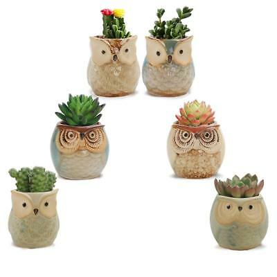 "Succulent Plant Pot Flower Planter Garden Small Plants 2.5"" Owl Decor Set NEW"