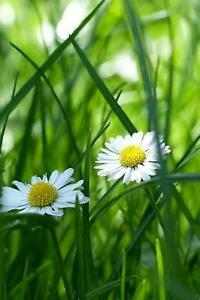 White-Daisy-Flowers-in-the-Grass-A-Blank-Lined-Journal-for-Writi-by-Paper-Pen2
