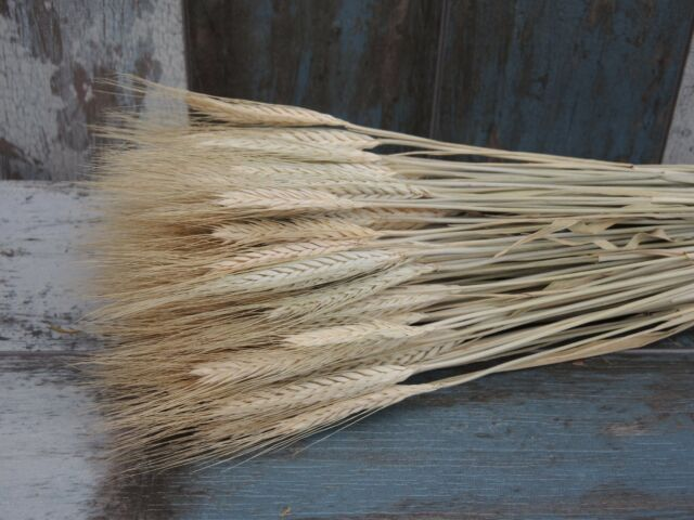 """100 GRAMS DRIED FLAX FOR FLOWER ARRANGING READY TO USE HARVEST COUNTRY 18/"""""""