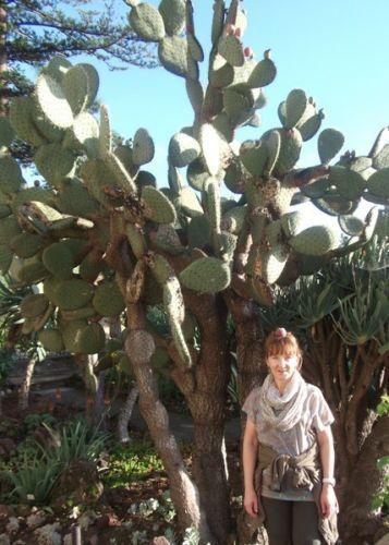 Baum-Kakteen Opuntien winterharte Kaktusse für den Garten immergrüne Hecken Deko
