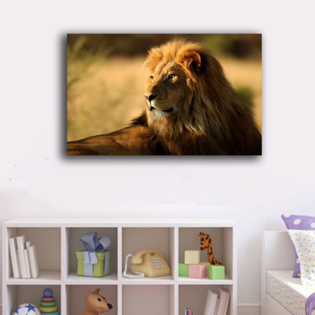 30×50×3cm Framed Canvas Prints One Lion Rest Wall Art Home Decor Painting Gift