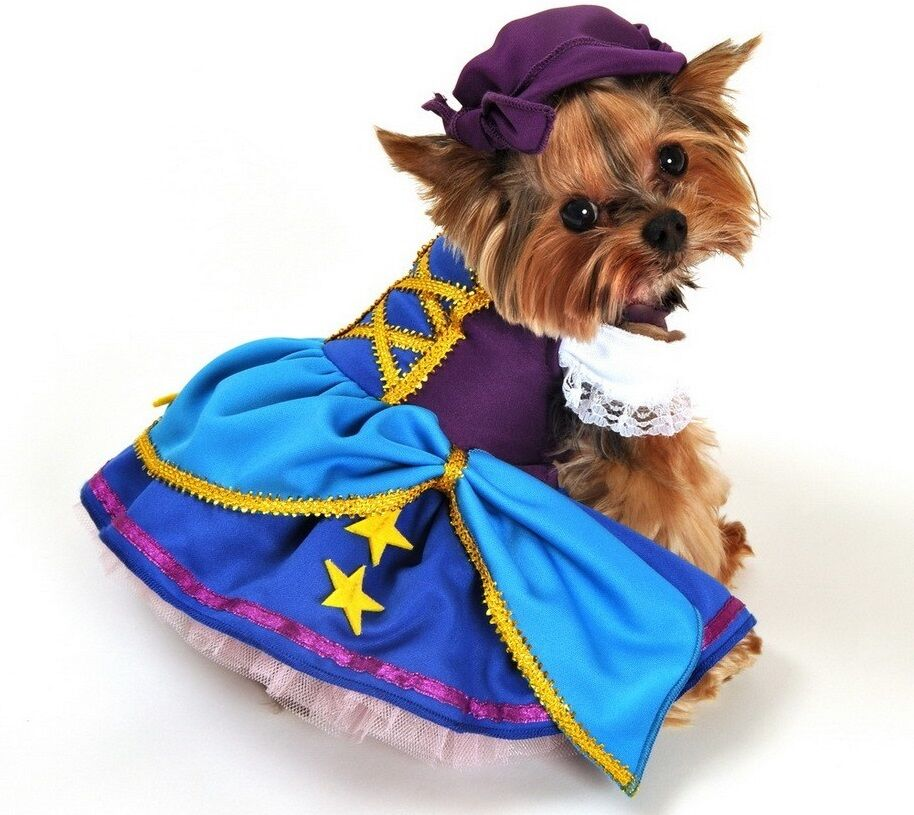 Tier Haustier Hund Katze Gypsy Pirate Party Halloween Kostüm Outfit Verkleidung  | Shopping Online