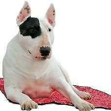Tappeto refrigerante RED WESTERN per cani  AQUA COOLKEEPER