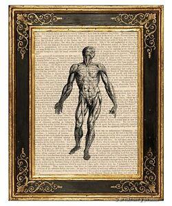 Muscular-System-1-Art-Print-on-Vintage-Book-Page-Medical-Anatomy-Illustration