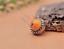 10X-10mm-Antique-Flower-Turquoise-Conchos-Leather-Crafts-Bag-Wallet-Decoration miniature 22