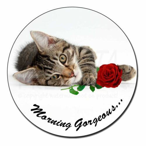 MG-204RFM Fridge Magnet Stocking Filler Kitten with Rose /'Morning Gorgeous/'..