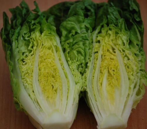 200 graines romana salade paris Island COS parris