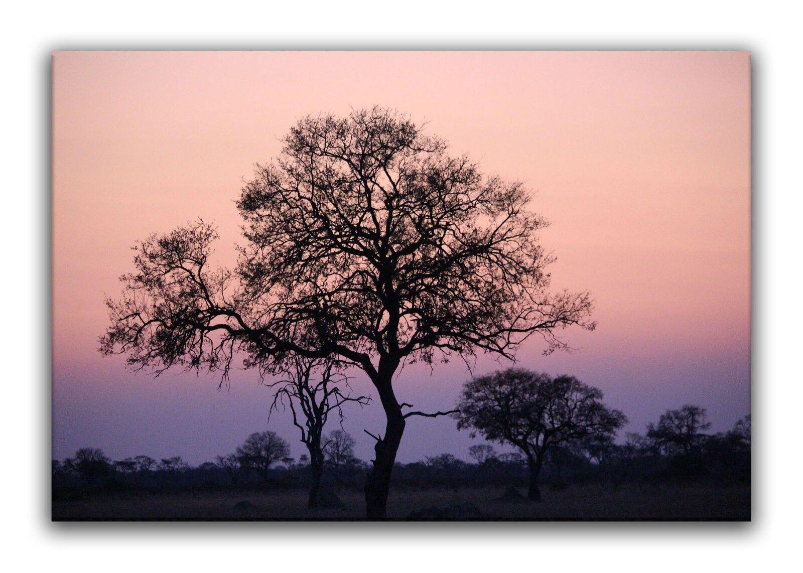 Leinwand Bild Wandbild Keilrahmenbild Afrika Safari Baum Sonnenuntergang Landsch