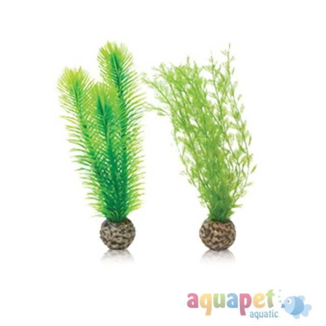 biOrb Feather Fern Plants Green Small