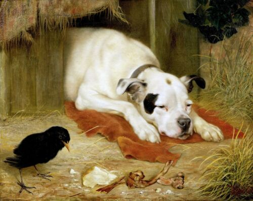 "14/""x11/"" Art Print American Bulldog Black bird Herbert William Weekes Terrier"