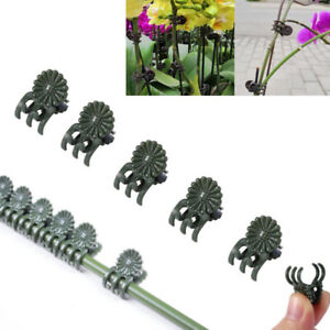 20-30-40Pcs-Plant-Support-Daisy-Garden-Orchid-Clips-Vines-Grow-Upright-Clip-wr