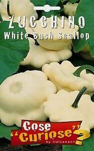 CUCURBITA-PEPO-White-Bush-caja-de-5-por-aprox-50-semillas-Vieira-De-Medula