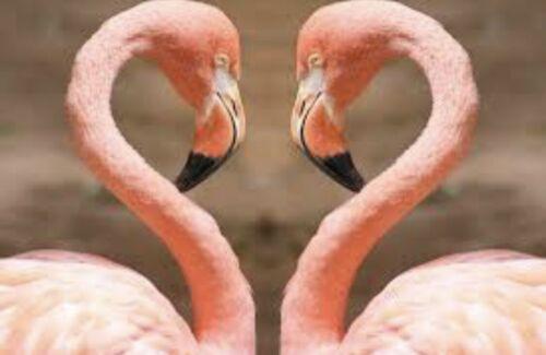 5 Stücke verschieden Flamingo Figur aus Plüsch.Kissen,Schlüsselanhänger.....