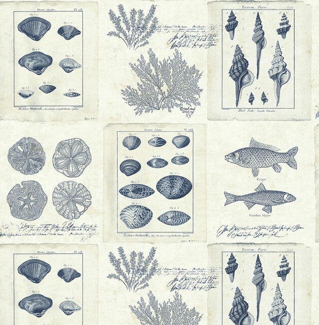 Tapete, Designtapete, Natur, Meer, Muscheln, Ytong, Marineblau
