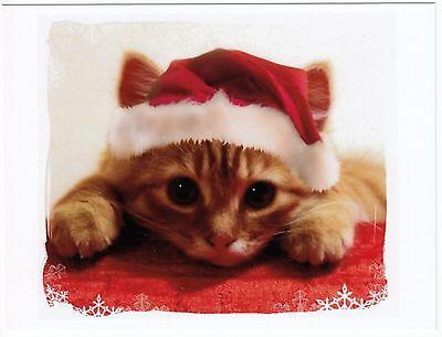 Postcard of Tiny Kitten Christmas Santa