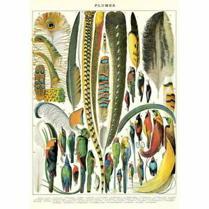 French Feather Chart Vintage Style Poster Decorative Paper Ephemera