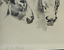 William-Robinson-Leigh-Etching-DONKEYS-United-States-1866-1955-15-034-H-17-039-W thumbnail 2