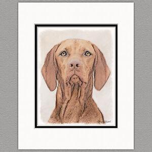 Vizsla-Hungarian-Dog-Original-Art-Print-8x10-Matted-to-11x14