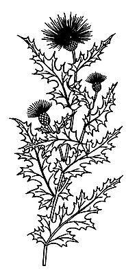 "Clear stamp Floral Prints FLONZ vintage acrylic rubber stamp 2.5/""x3/"""
