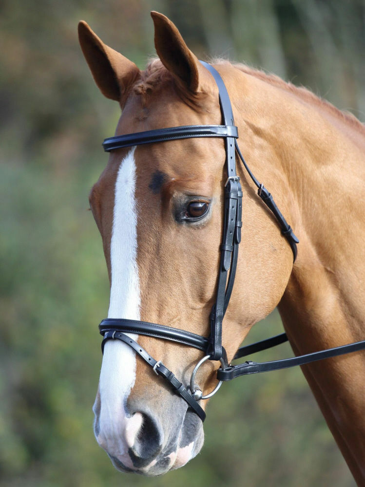 Shires Aviemore Raised Flash Bridle Complete With Reins