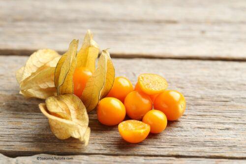 Blasenkirsche Physalis Obst 150 Samen MENGENRABATT !!!