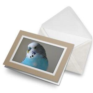 Greetings-Card-Biege-Blue-Budgie-Bird-Birds-14623