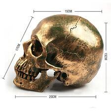 Life Size 1:1 Resin Human Skull Model Medical Teaching Skeleton Head  Bronze