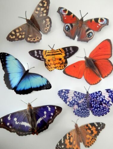 8 natural 3D butterflies from the Country Collection wall stickers bathroom