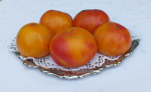 15 Tomato Seeds-Dwarf Project-RUSSIAN SWIRL Heirloom Vegetable