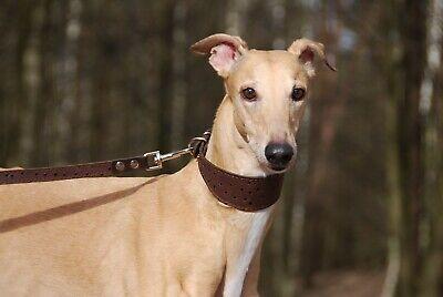 Collar de Perro Cuero Galgo Saluki Whippet Borzoi Basenji Cachorro