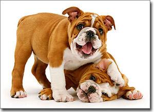 playful bulldog puppies funny dog birthday card  greeting card by, Birthday card