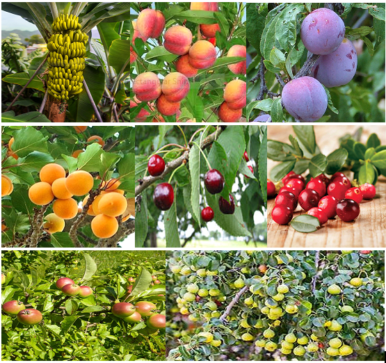 50 x mixed fruit tree seeds. Pot luck from 8 different varieties
