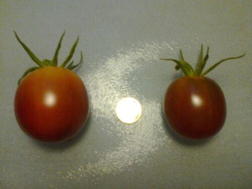 Tomato Seeds Schwarze von Tula Tomaten Samen 15 Korn