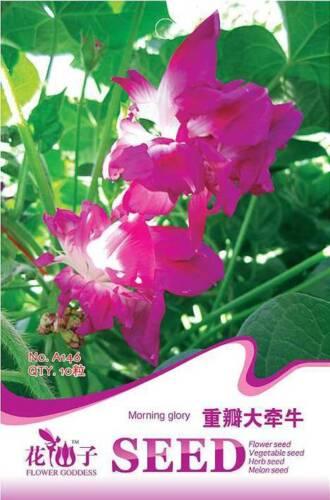 Original Package 10 Morning Glory Seeds Pharbitis Hybrida A146