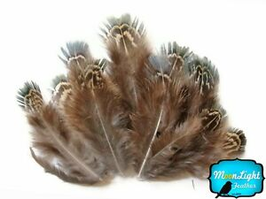 ALMOND HAIRY Pheasant #P45; Headband//Hats//Costume//Halloween ONE FEATHER PAD