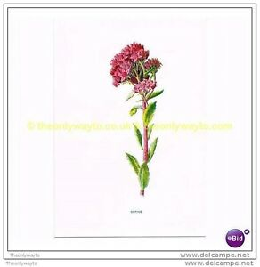 ORPINE-Book-Illustration-c1902