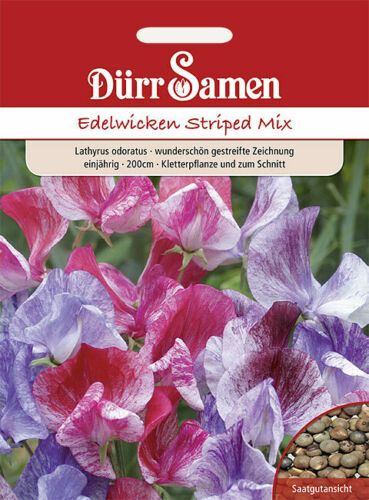 protection par Répartition Mix/' 200 cm Rayé Fleurs Dürr Graines-edelwicken violettes