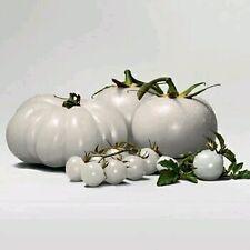 Rare WHITE Tomato Seeds Very Tasty Nutritive Heath Vegetables 30 Seeds