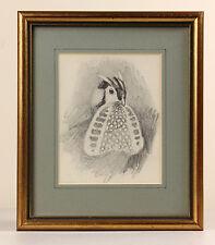 John Cyril HARRISON   fine ORIGINAL pencil sketch   TEMMINCK'S tragopan   bird