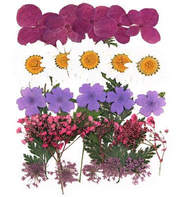 Pressed flowers foliage larkspur marguerite daisy lace flower gypsophila